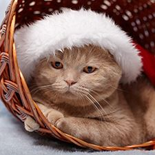 Cat_Christmas_hat_sm