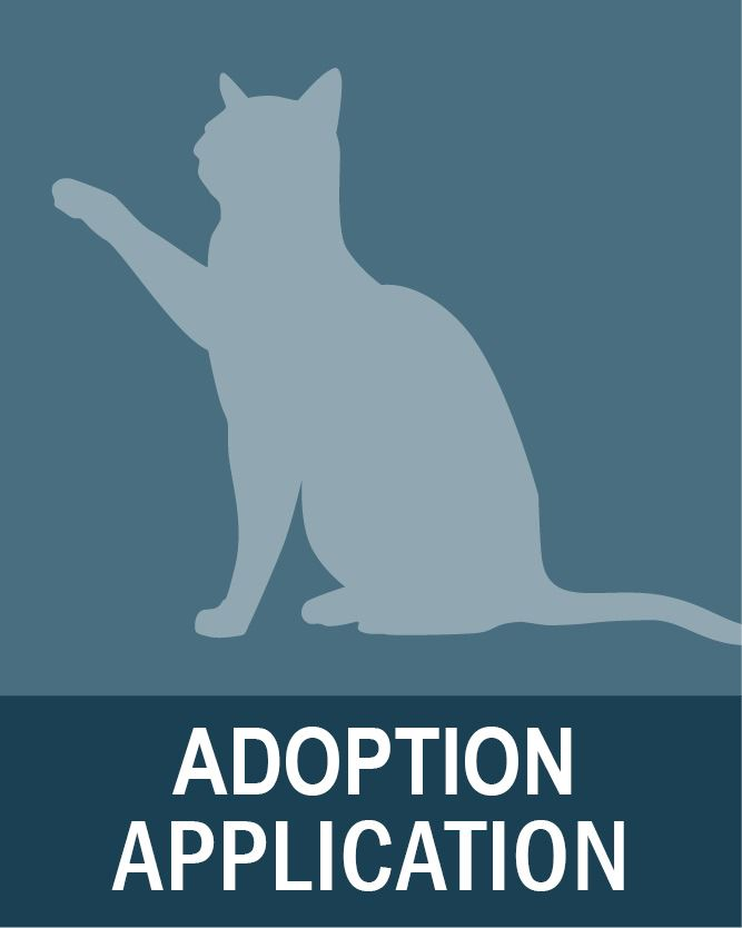 Cat Adoption Application Opens in new window